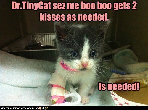 Dr.TinyCat sez me boo boo gets 2 kisses as needed. Is needed!
