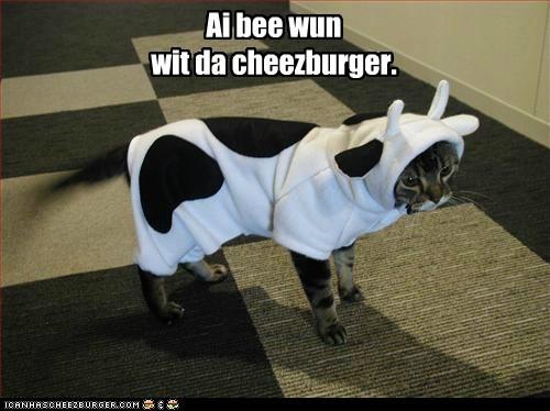 Cheezburger Image 5690741504