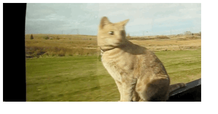 fearless fear gifs driving Cats - 5690885