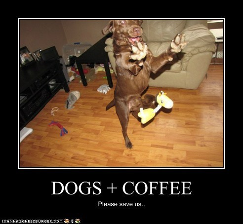 DOGS + COFFEE Please save us..