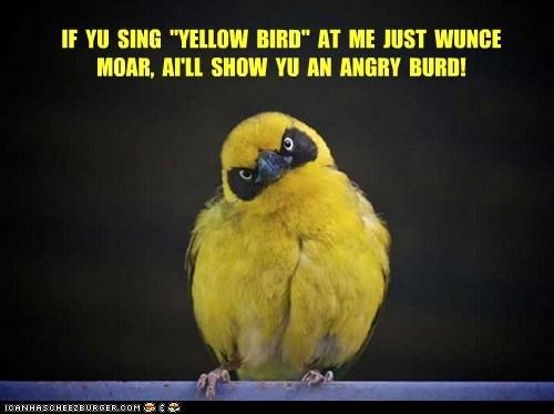 "IF YU SING ""YELLOW BIRD"" AT ME JUST WUNCE MOAR, AI'LL SHOW YU AN ANGRY BURD!"