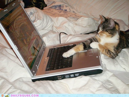 cat catnip computer laptop medicinal online ordering purposes reader squees