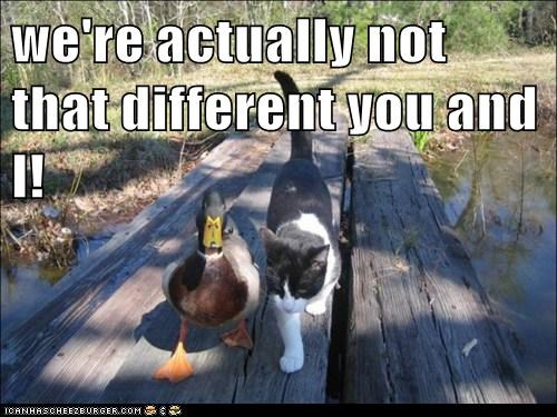 animals cat duck friends friendship I Can Has Cheezburger - 5692615936