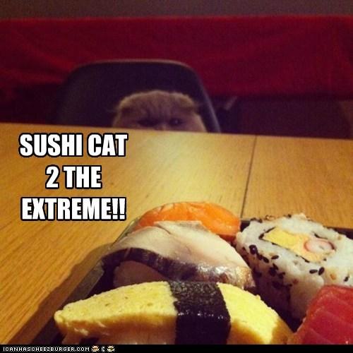 SUSHI CAT2 THE EXTREME!!