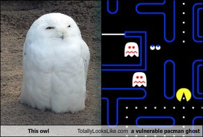animal funny Owl pac man TLL - 5692697088