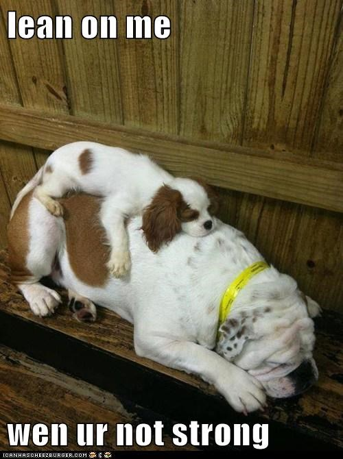 adorable asleep best of the week bulldog friends friendship Hall of Fame lean on me sleeping spaniel - 5692845312