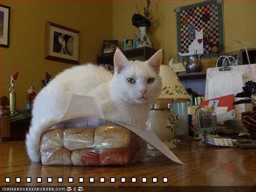 Cheezburger Image 5692911360