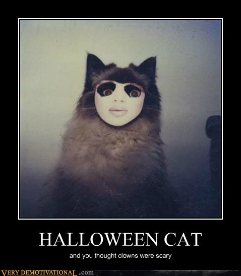 cat halloween hilarious scary - 5693030400