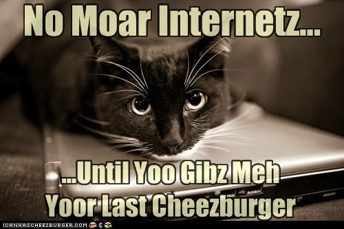 Cheezburger Image 5693659136