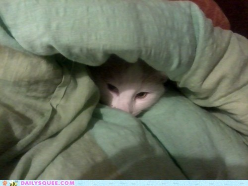 bundled up,cat,cold,covers,hiding,peeking,reader squees,snuggling,warm,warmth