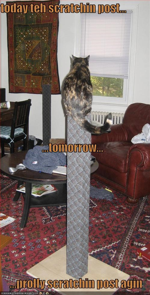 lolcats scratching posts - 569414400