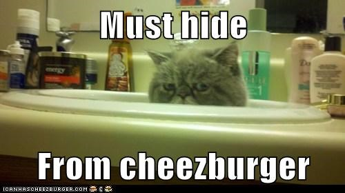 Cheezburger Image 5694340352