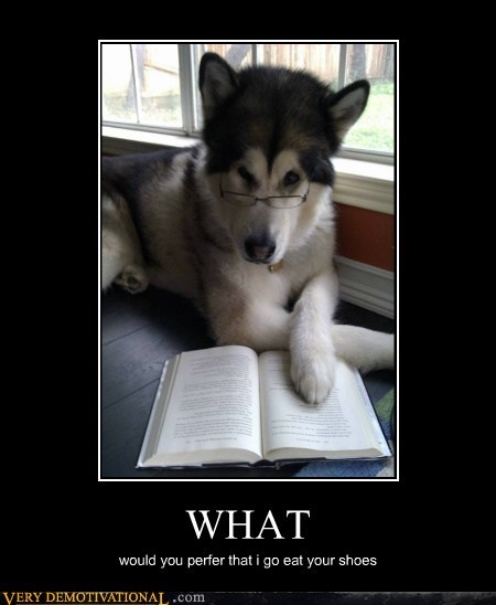 dogs,hilarious,reading,shoes