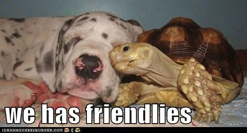 adorable friends friendship great dane interspecies friendship love puppy turtle - 5694583296