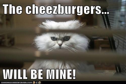 Cheezburger Image 5695622656