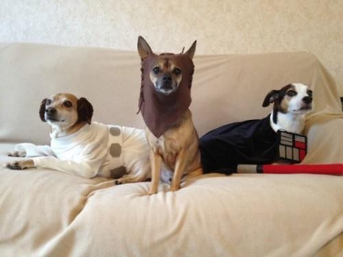 doggeh star-dogs-of-wars Sundog - 5696446464