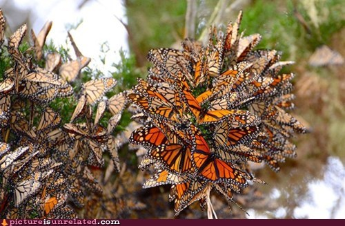 amazing picture that is a ball of butterflies