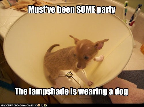 Must've been SOME party The lampshade is wearing a dog