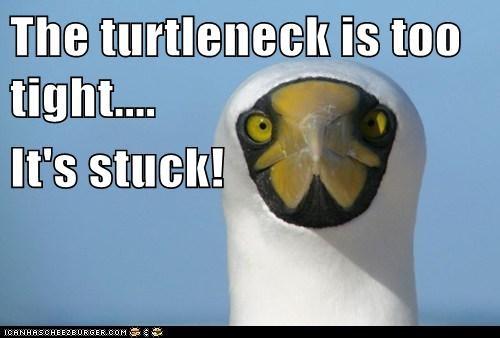 animals bird fashion stuck - 5697458688