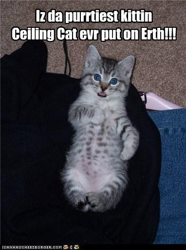 Iz da purrtiest kittin Ceiling Cat evr put on Erth!!!