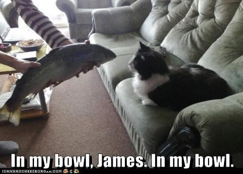 bowl butler caption captioned cat fish human noms request - 5698425088