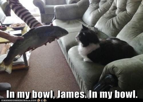 bowl butler caption captioned cat fish human noms request - 5698425088