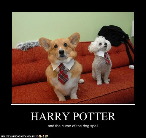 HARRY POTTER and the curse of the dog spell