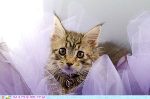 Battle cat disapproval do not want fight opinion reader squees tutu versus - 5698738944