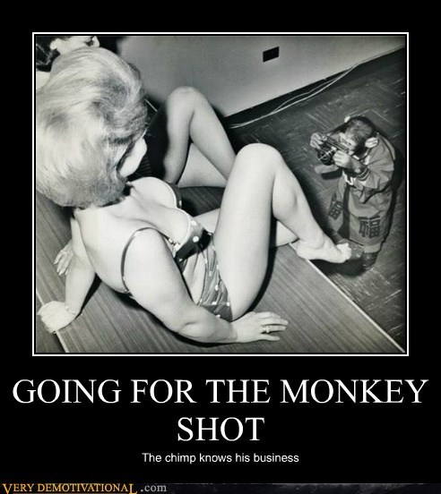 camera chimp hilarious money shot monkey