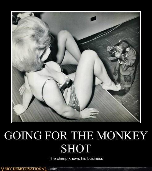 camera chimp hilarious money shot monkey - 5698976000