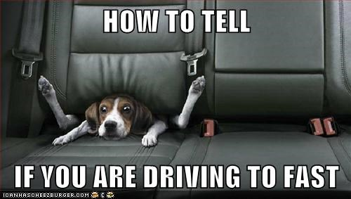 beagle best of the week car driving driving too fast Hall of Fame oops photoshopped - 5699490304