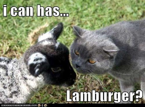 Cheezburger Image 5699512064