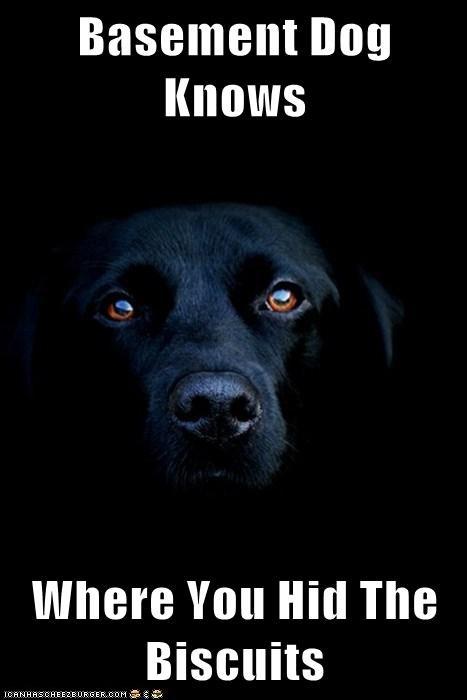 basement dog biscuits Black Lab food goodies know labrador retriever treat - 5699603456