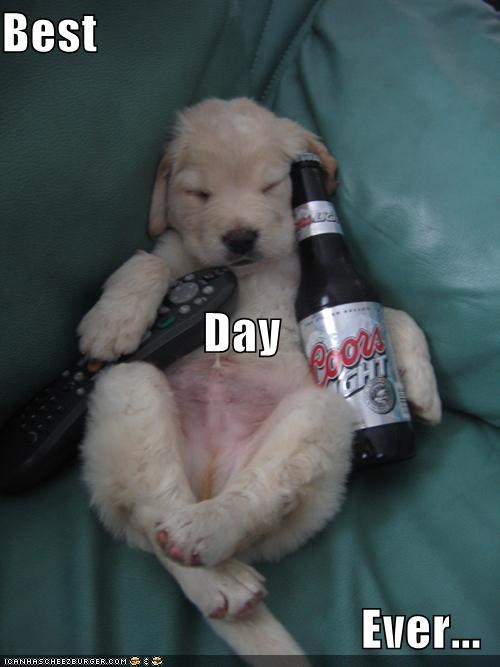 beer,puppy,sleeping,TV,whatbreed
