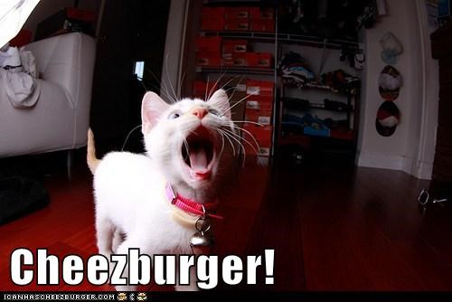 Cheezburger Image 5700768512