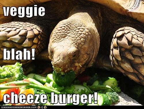 Cheezburger Image 5700809472