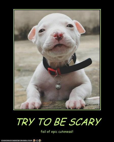 TRY TO BE SCARY fail of epic cuteness!!