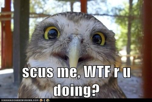 animals,bird,birds,Owl,wtf,wtf are you doing