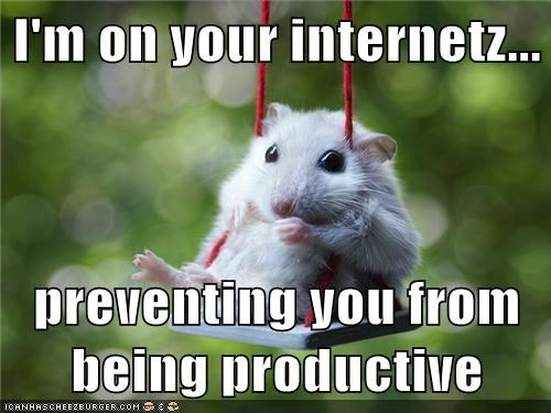 adorable,animals,best of the week,Hall of Fame,hamster,procrastination,swing