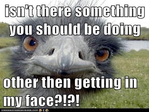 animals annoyed birds emu in your face irritated