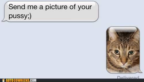 cat,dirty pics,pun,pussy,sexting,vagina