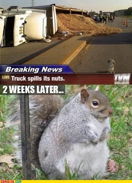 animals,best of week,Breaking News,GEICO,nuts,squirrel