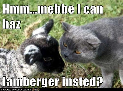 Cheezburger Image 5702746624