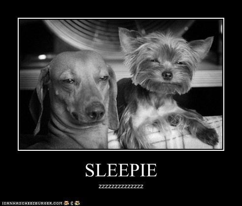 SLEEPIE zzzzzzzzzzzzzz