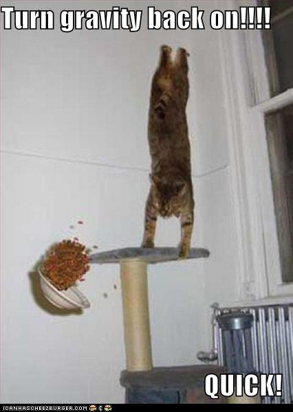 anti gravity cat tower classics disaster food Gravity messes messy quick