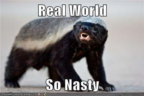animals,ew,honey badger,nasty