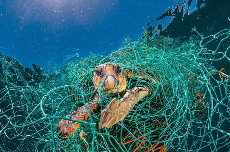 world ecology national geographic damages plastic animals - 5703941