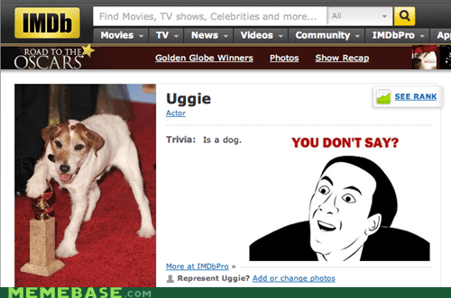 dogs Memes nick cage uggie you dont say - 5704183808