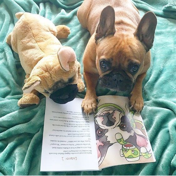 dogs cute dogs funny cute dogs cute funny dogs dogs reading reading dogs - 5704197