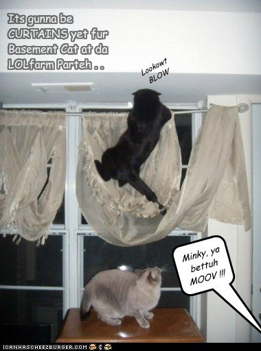 Its gunna be CURTAINS yet fur Basement Cat at da LOLfarm Parteh . . Minky, ya bettuh MOOV !!! Lookowt BLOW